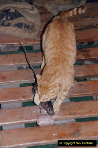 2002 July - London. (41) HMS Belfast. Ship's Cat. 41
