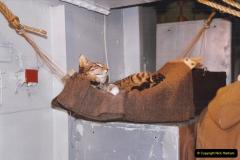 2002 July - London. (42) HMS Belfast. Ship's Cat. 42