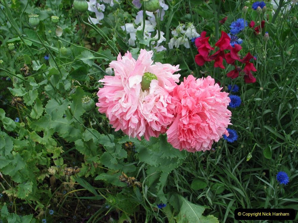 Retrospective 2004 June - The colours of Northamptonshire. (8) 08