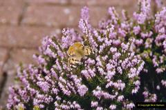 2004 Miscellaneous. (40) Forde Abbey, Dorset group visit.