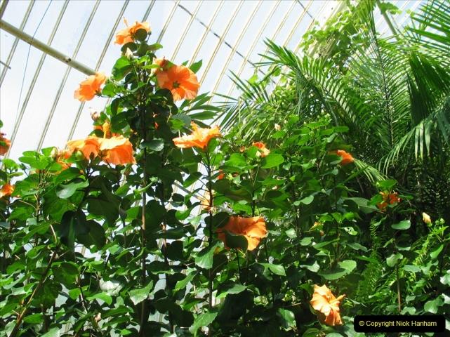 Retrospective 2005 July - RHS Kew. (6) 06