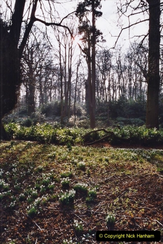 2005 Miscellaneous (13) Kingston Lacy near Wimborne, Dorset in Snowdrop time.