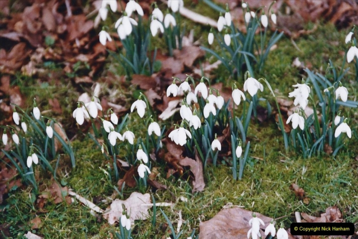 2005 Miscellaneous (7) Kingston Lacy near Wimborne, Dorset in Snowdrop time.