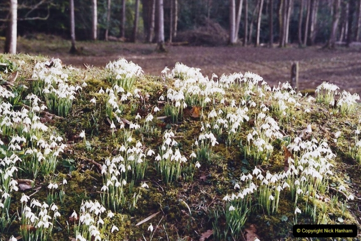 2005 Miscellaneous (8) Kingston Lacy near Wimborne, Dorset in Snowdrop time.