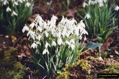 2005 Miscellaneous (12) Kingston Lacy near Wimborne, Dorset in Snowdrop time.