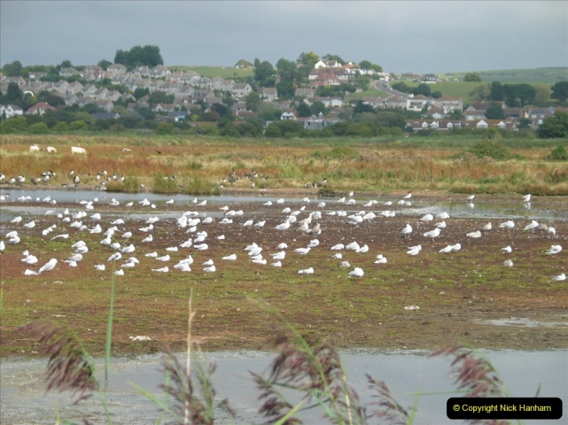 Retrospective 2005 September - Weymouth and Lodmore Nature Reserve group visit.  (19)