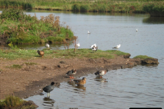 Retrospective 2005 September - Weymouth and Lodmore Nature Reserve group visit.  (21)