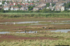 Retrospective 2005 September - Weymouth and Lodmore Nature Reserve group visit.  (24)
