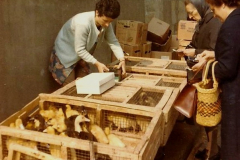 1973 Retrospective France North West and Paris. (31) Segre. 28