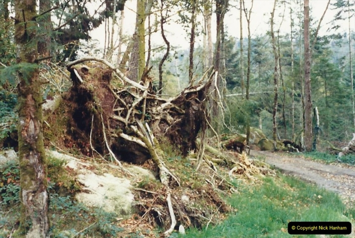 1988 Brittany, France. (16) Huelgoat visit after the Great Storm devistation of Occtober 1987. the South of Englang also suffered from the same storm. 16