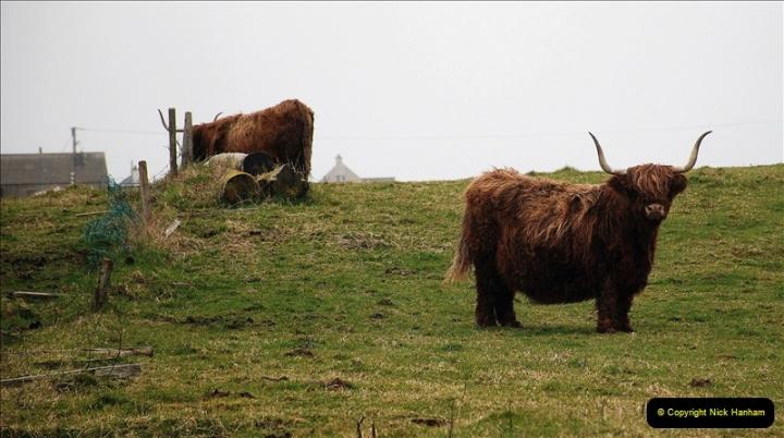 2019-03-29 Stornoway, Isle of Lewis. (39) Highland cattle. 38