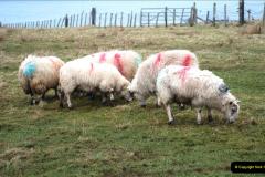 2019-03-29 Stornoway, Isle of Lewis. (40) 39