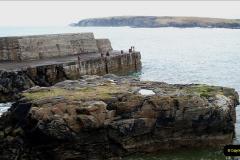 2019-03-29 Stornoway, Isle of Lewis. (40) Highland cattle. 40