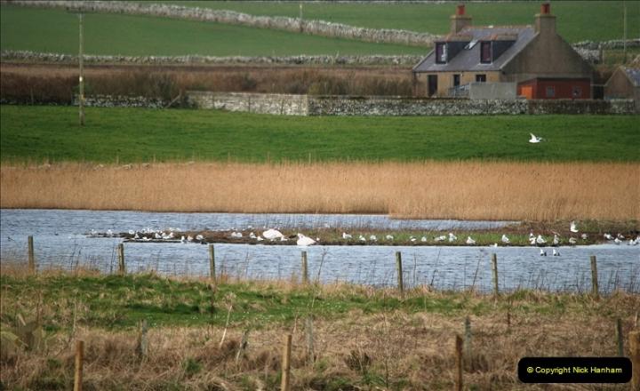 2019-03-28 Kirkwall, Orkney Islands. (44) 044