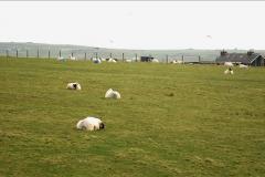 2019-03-28 Kirkwall, Orkney Islands. (32) 032
