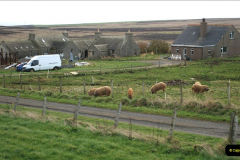 2019-03-28 Kirkwall, Orkney Islands. (36) Island pigs.036
