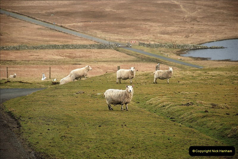 2019-03-27 Lerwick, Shetland Islands. (195) 195