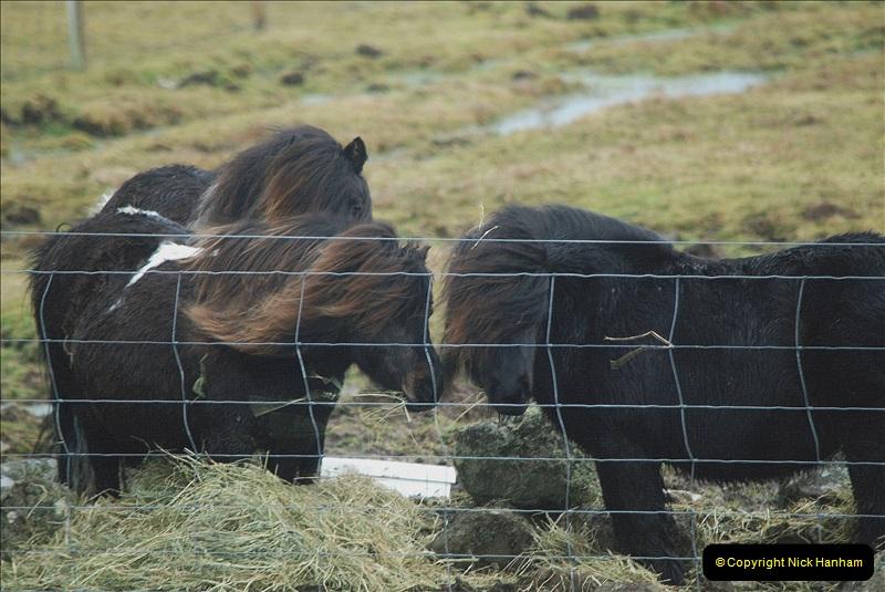 2019-03-27 Lerwick, Shetland Islands. (199) Shetland Ponies. 199