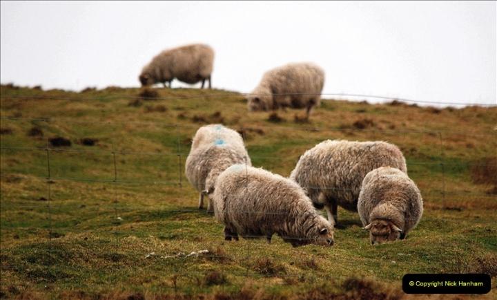 2019-03-27 Lerwick, Shetland Islands. (129) 129