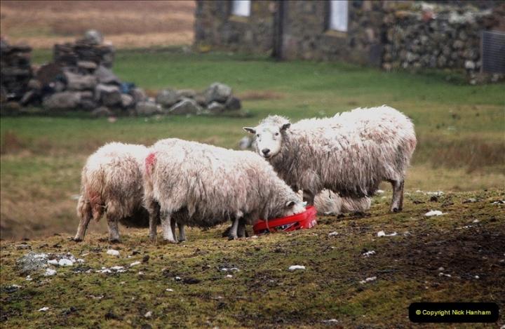 2019-03-27 Lerwick, Shetland Islands. (130) 130
