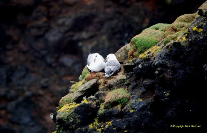 2019-03-27 Lerwick, Shetland Islands. (165) At Eshaness Lighthouse. 165