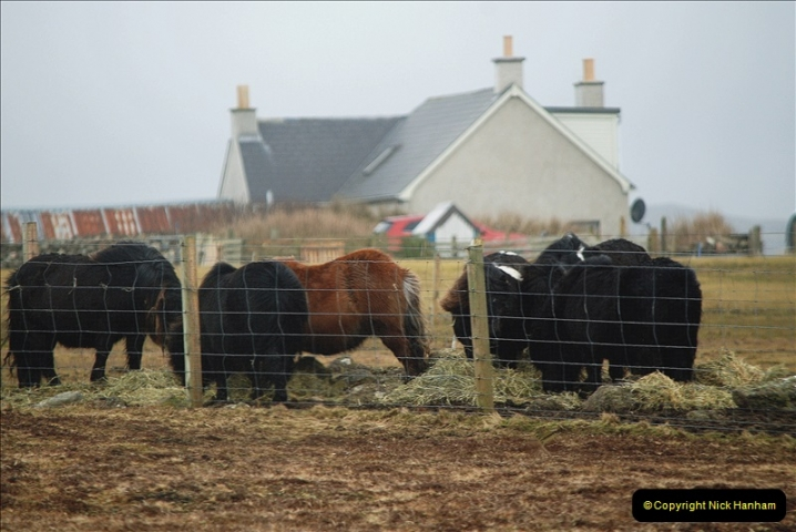 2019-03-27 Lerwick, Shetland Islands. (198) Shetland Ponies. 198