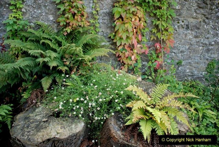2019-09-17 Kilver Court Gardens, Shepton Mallet, Somerset. (18) 089