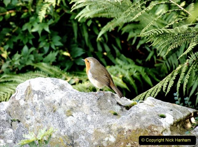 2019-09-17 Kilver Court Gardens, Shepton Mallet, Somerset. (57) 128