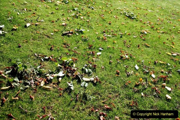 2019-09-17 Kilver Court Gardens, Shepton Mallet, Somerset. (69) 140