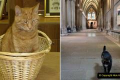 2019-09-16 Wells, Somerset. (41) Louis and new cat Pangur. 041