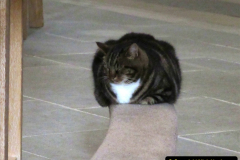 2019-09-16 Wells, Somerset. (42) Louis and new cat Pangur. 042