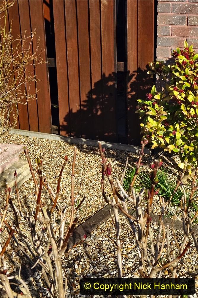 2021-02-27 New side gate for waste bins. Garden makeover. (20) 020
