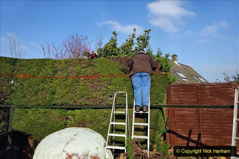 2021-03-01 Lowering hedge. Garden makeover. (39) 039