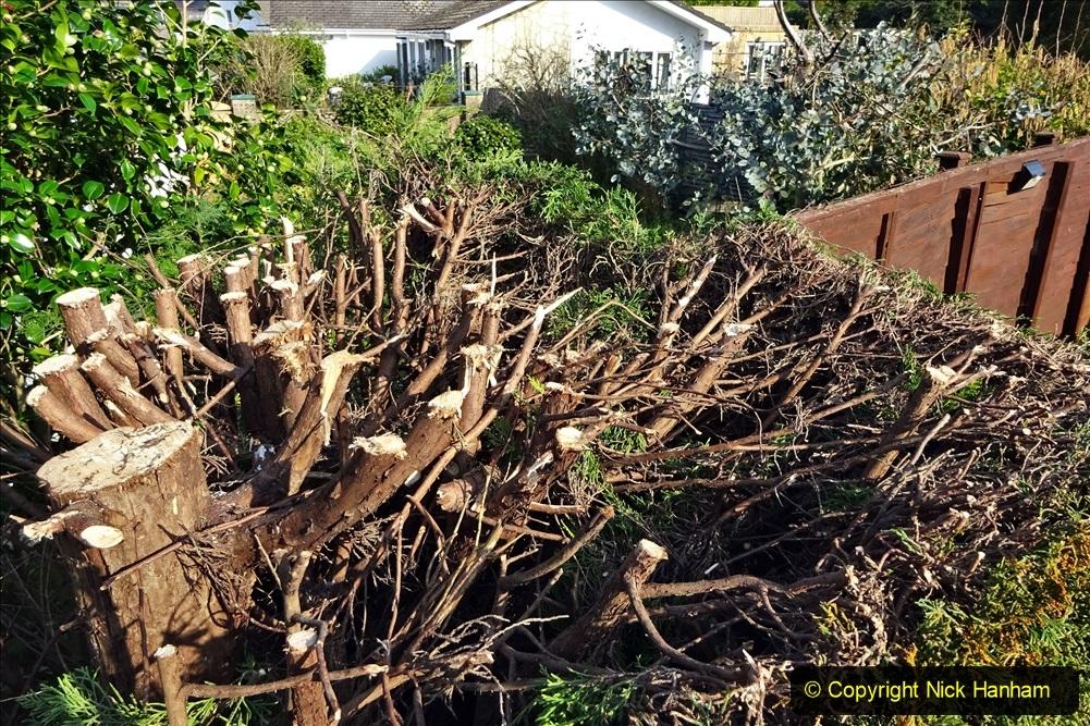 2021-03-01 Lowering hedge. Garden makeover. (41) 041