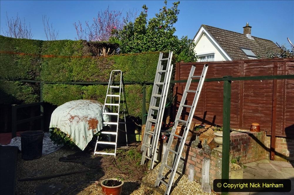 2021-03-01 Lowering hedge. Garden makeover. (42) 042