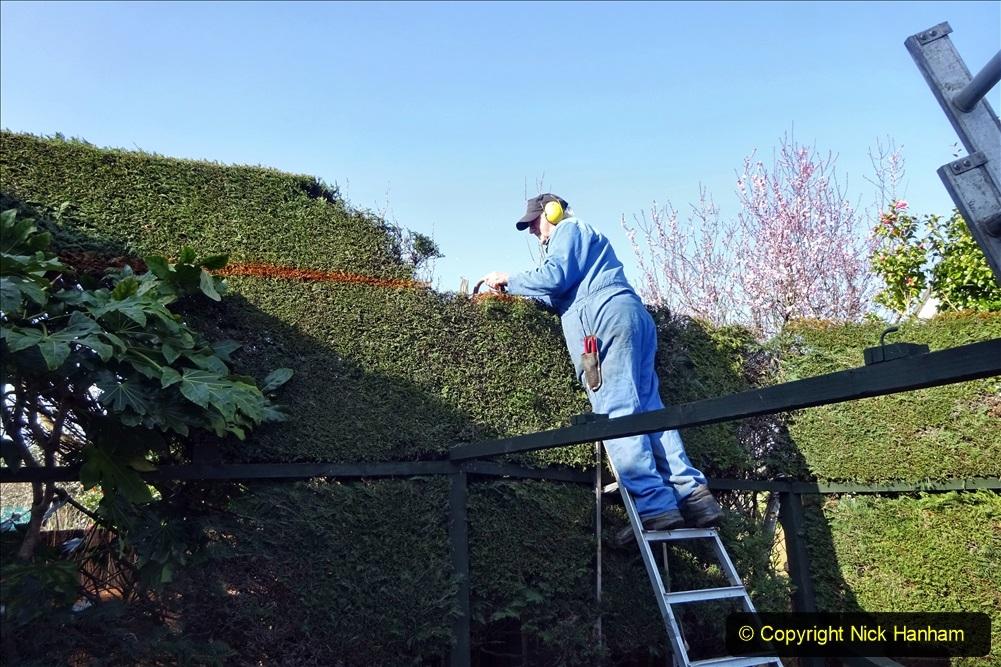 2021-03-01 Lowering hedge. Garden makeover. (43) 043