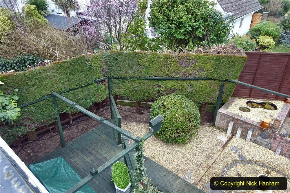 2021-03-01 Lowering hedge. Garden makeover. (47) 047