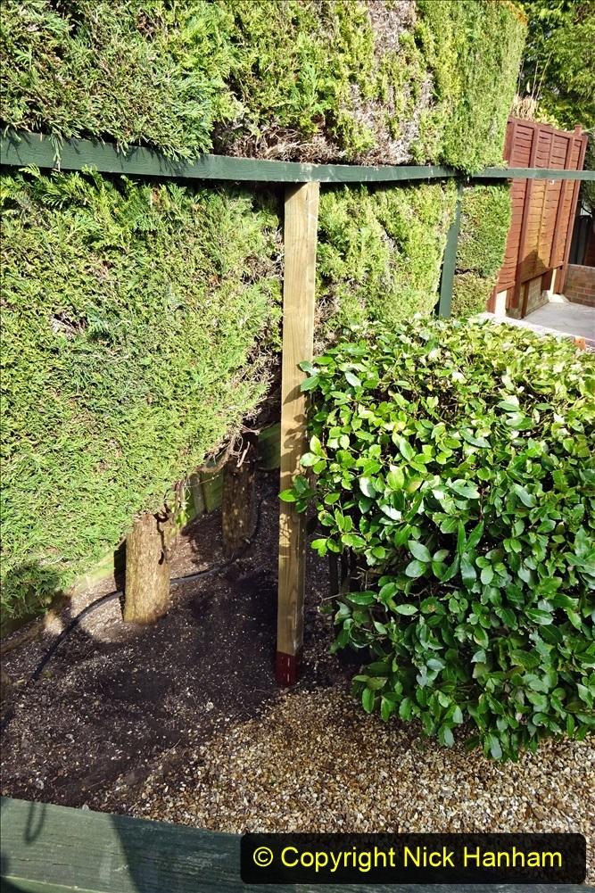 2021-03-03 Post for new fence. Garden makeover. (57) 057