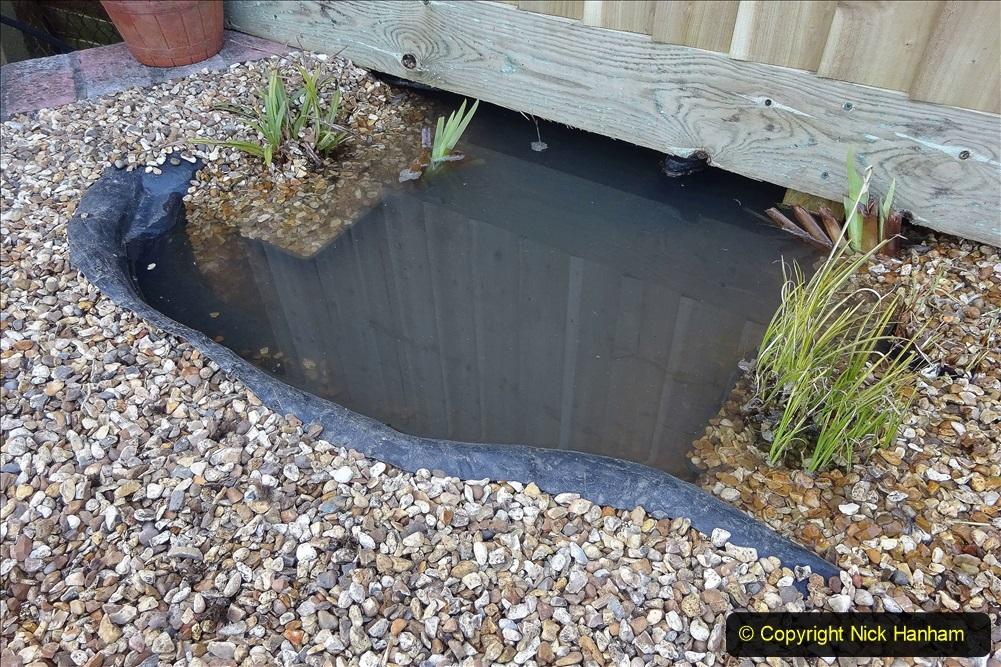 2021-03-07 New pond for rear garden. Garden makeover. (95) 095