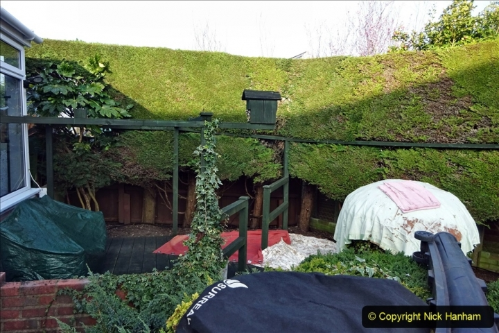 2021-03-01 Lowering hedge. Garden makeover. (37) 037