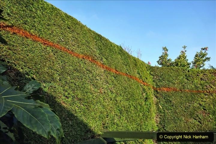 2021-03-01 Lowering hedge. Garden makeover. (38) 038