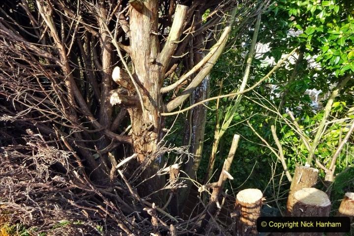 2021-03-01 Lowering hedge. Garden makeover. (40) 040