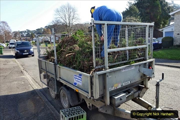 2021-03-01 Lowering hedge. Garden makeover. (44) 044