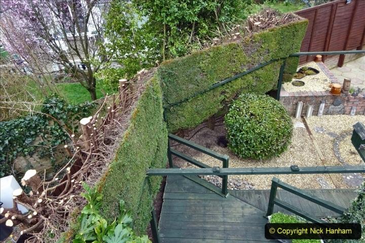 2021-03-01 Lowering hedge. Garden makeover. (48) 048