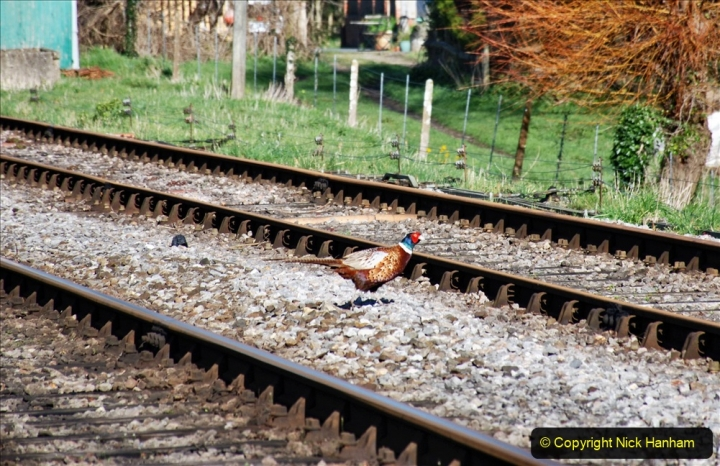 2020-03-16 The Swanage Railway. (15) 015