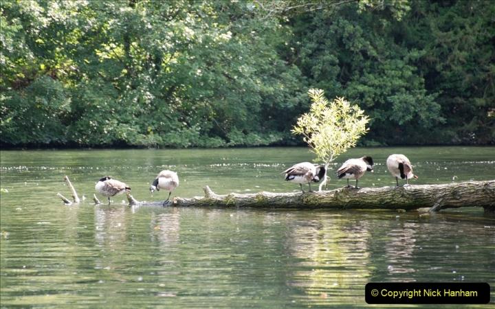 2019-08-20 Cliveden (NT) Taplow, Maidenhead, Berkshire. (100) River Thames boat trip. 100