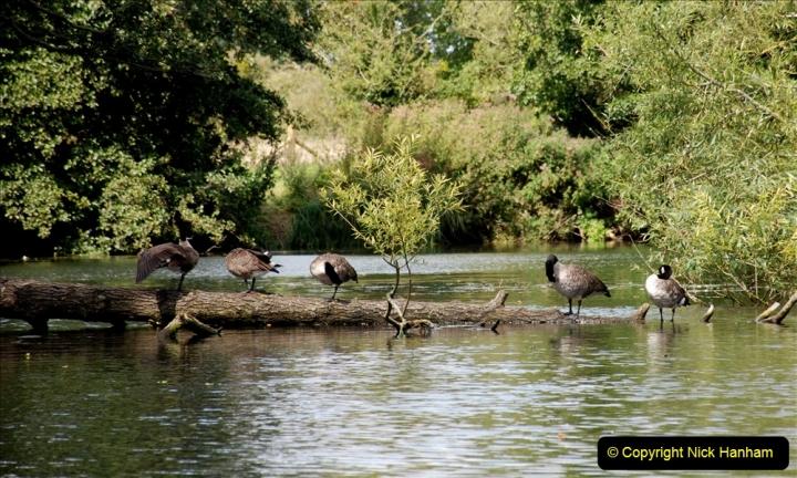 2019-08-20 Cliveden (NT) Taplow, Maidenhead, Berkshire. (129) River Thames boat trip. 129