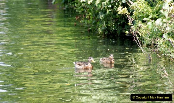 2019-08-20 Cliveden (NT) Taplow, Maidenhead, Berkshire. (76) River Thames boat trip. 076