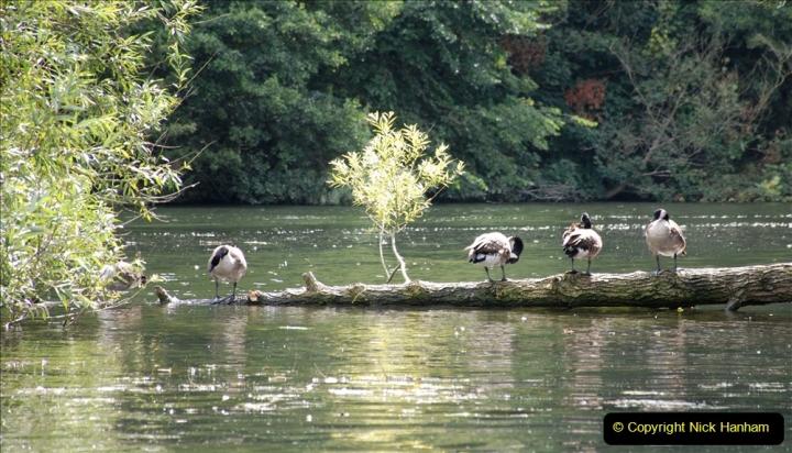 2019-08-20 Cliveden (NT) Taplow, Maidenhead, Berkshire. (99) River Thames boat trip. 099
