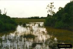 1991-07-20 The Everglades, Florida.  (3)070